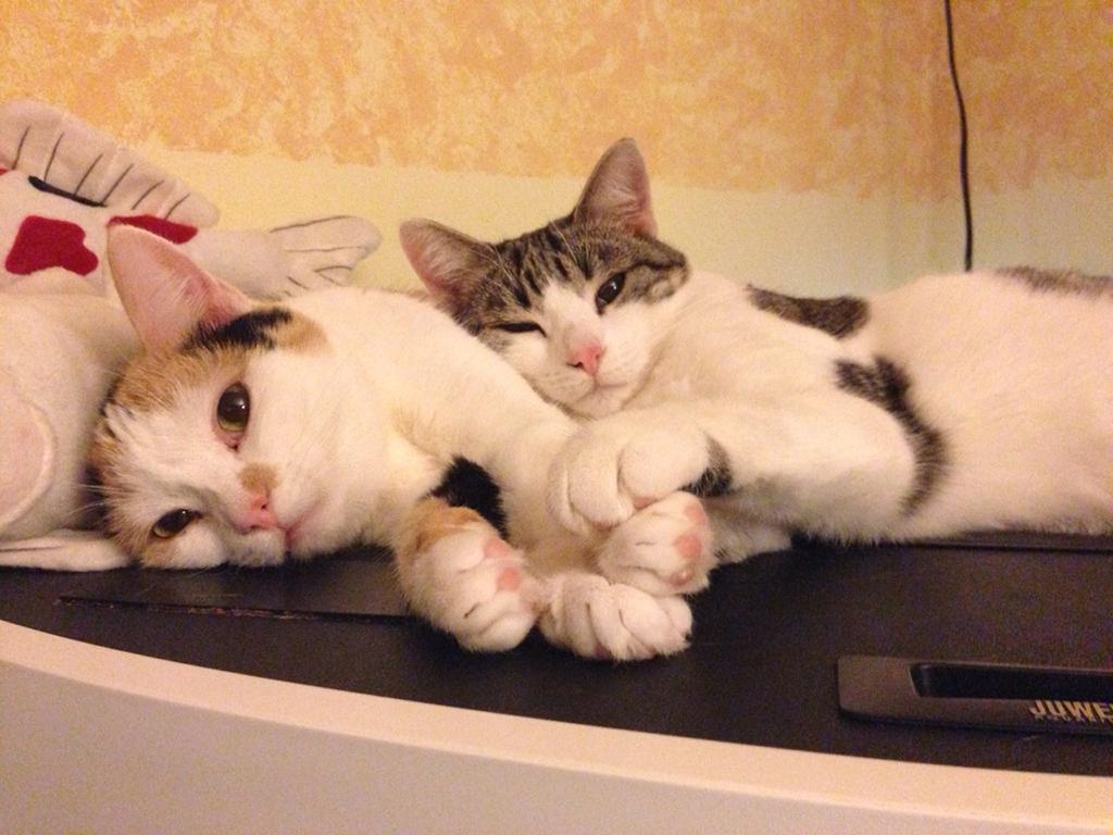 Samira und Nala