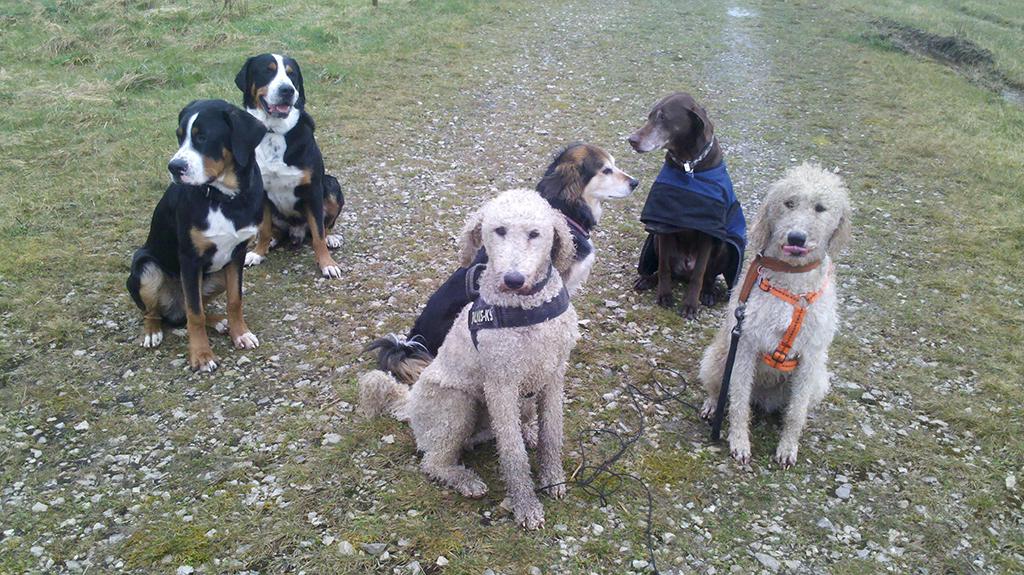 Ares, Taru, Cleo und Gino