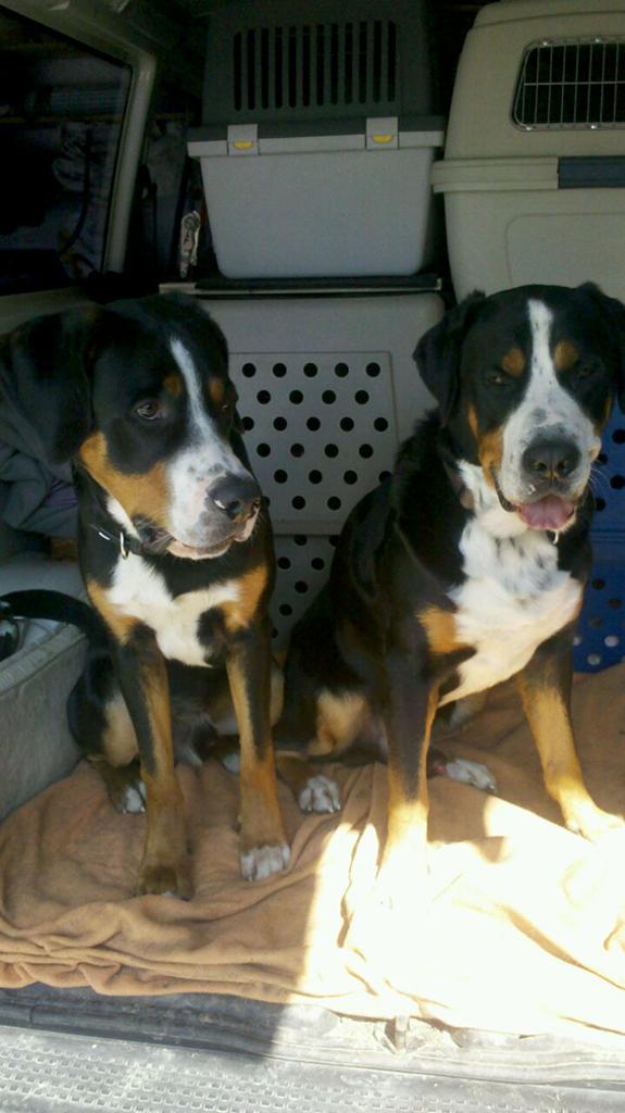 Ares und Taru